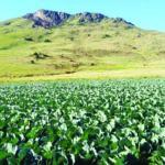 New farming methods set to improve yields